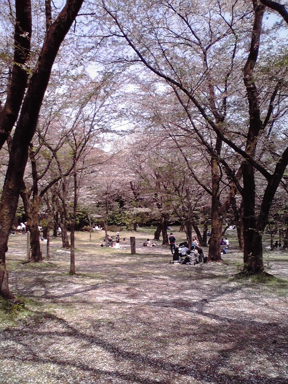 桜の画像 p1_34